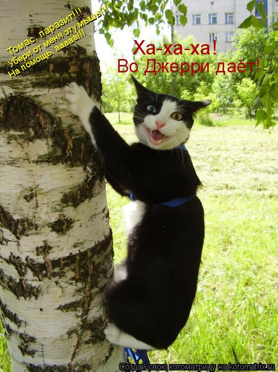 Котоматрица: Томас, паразит!!!  Убери от меня эту мышь!!! На помощь, ааааа!!! Ха-ха-ха!  Во Джерри даёт!