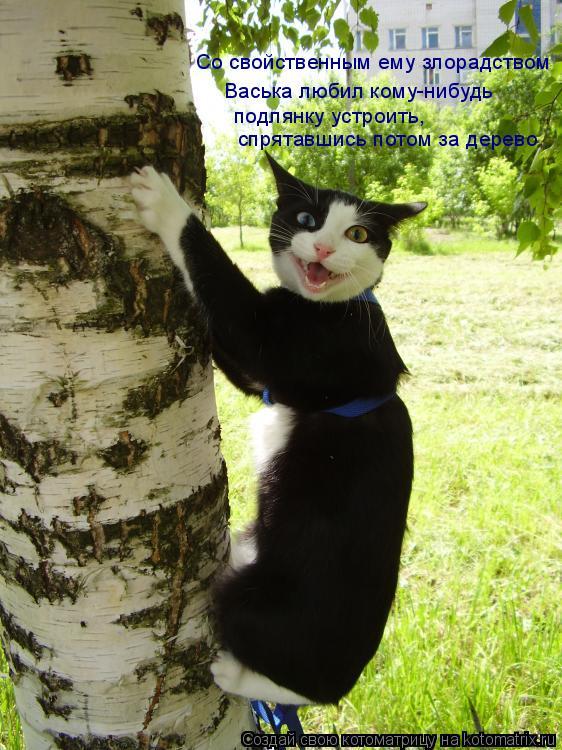 Котоматрица: Со свойственным ему злорадством Васька любил кому-нибудь подлянку устроить, спрятавшись потом за дерево