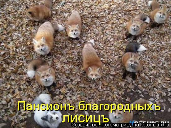 Котоматрица: лисицъ Пансионъ благородныхъ
