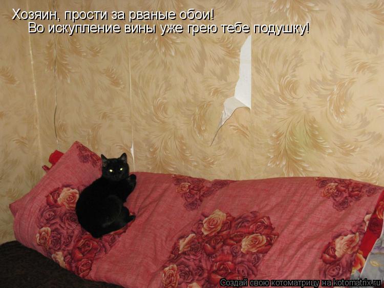 Котоматрица: Хозяин, прости за рваные обои! Во искупление вины уже грею тебе подушку!