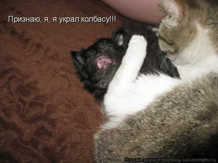 Котоматрица: Признаю, я, я украл колбасу!!!
