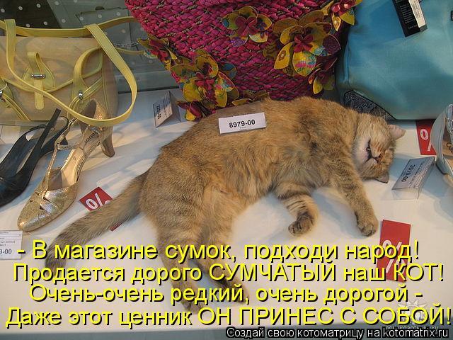 Котоматрица: - В магазине сумок, подходи народ! Продается дорого СУМЧАТЫЙ наш КОТ! Очень-очень редкий, очень дорогой -  Даже этот ценник ОН ПРИНЕС С СОБОЙ!