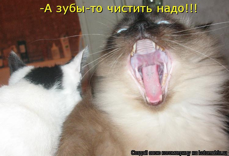 Котоматрица: -А зубы-то чистить надо!!!