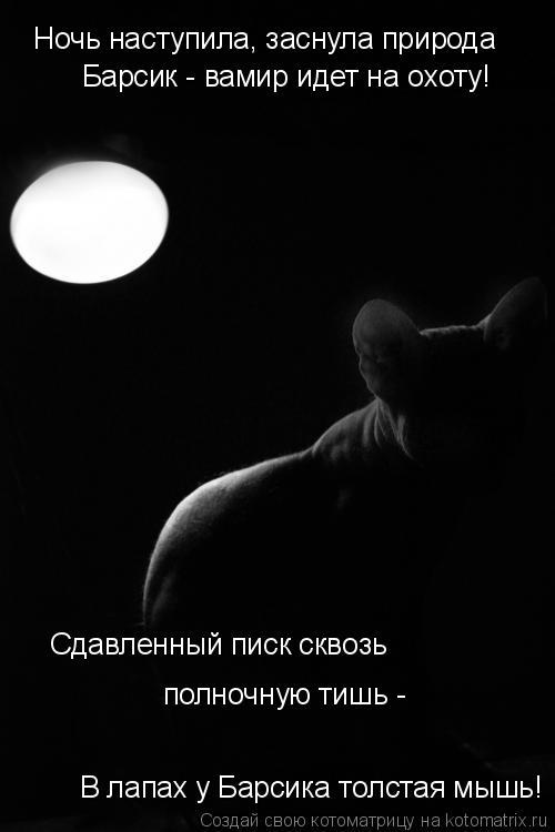 Котоматрица: Ночь наступила, заснула природа Барсик - вамир идет на охоту! В лапах у Барсика толстая мышь! Сдавленный писк сквозь  полночную тишь -