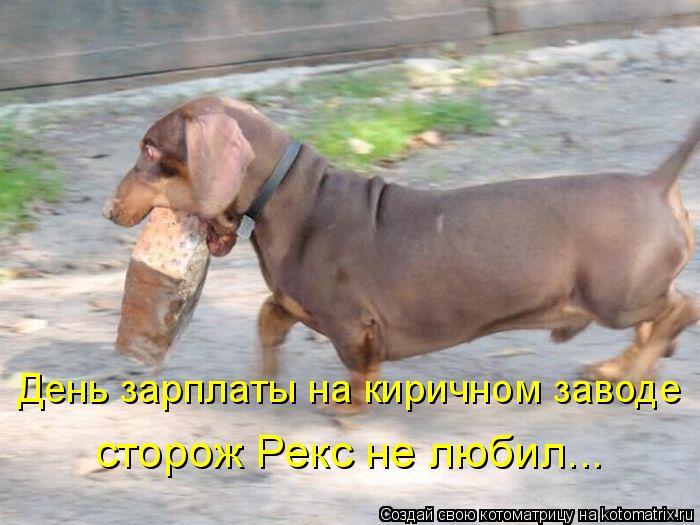 Котоматрица: День зарплаты на киричном заводе сторож Рекс не любил...