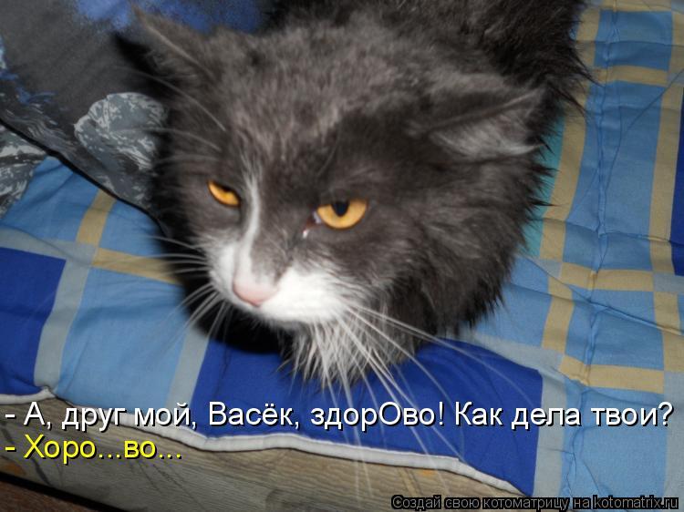 Котоматрица: - А, друг мой, Васёк, здорОво! Как дела твои? - Хоро...во...