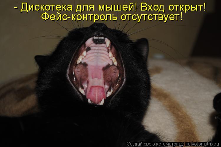 Котоматрица: - Дискотека для мышей! Вход открыт! Фейс-контроль отсутствует!