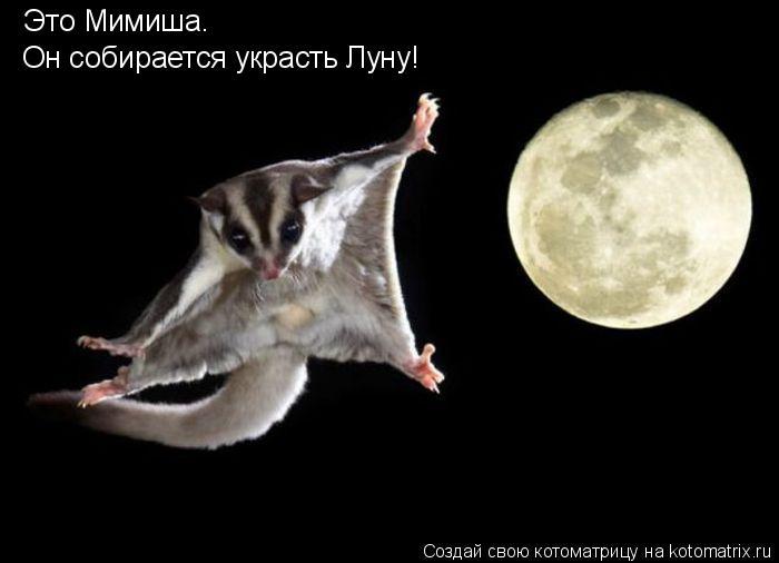 Котоматрица: Это Мимиша. Он собирается украсть Луну!