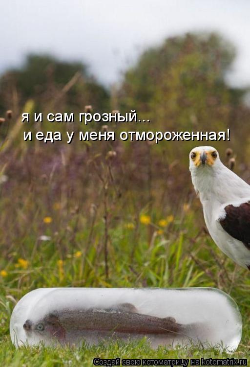 Котоматрица: я и сам грозный... и еда у меня отмороженная!