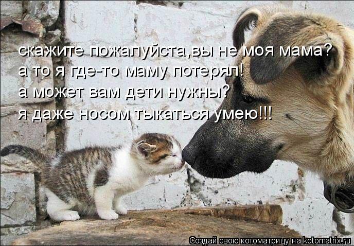 Котоматрица: скажите пожалуйста,вы не моя мама? а то я где-то маму потерял! а может вам дети нужны? я даже носом тыкаться умею!!!