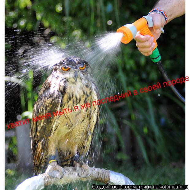 Котоматрица: хватит меня мыть я же последний в своей породе