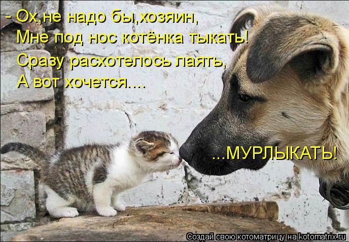 Котоматрица: - Ох,не надо бы,хозяин, Мне под нос котёнка тыкать! Сразу расхотелось лаять, А вот хочется.... ...МУРЛЫКАТЬ!