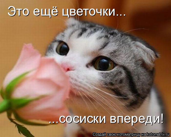 Котоматрица: Это ещё цветочки... ...сосиски впереди!