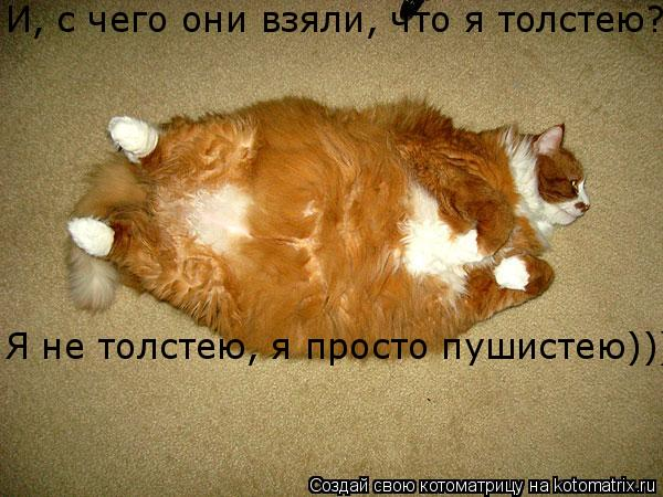 Котоматрица: И, с чего они взяли, что я толстею?!?! Я не толстею, я просто пушистею)))