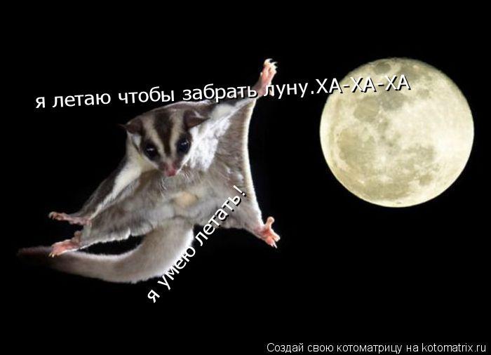 Котоматрица: я умею летать!  я летаю чтобы забрать луну.ХА-ХА-ХА