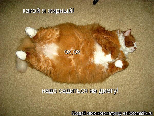 Котоматрица: какой я жирный! надо садиться на диету! ох,ох