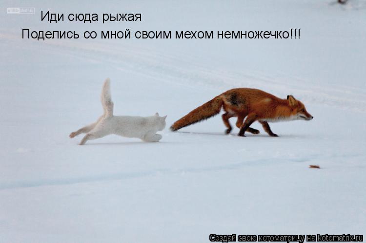 Котоматрица: Иди сюда рыжая Поделись со мной своим мехом немножечко!!!