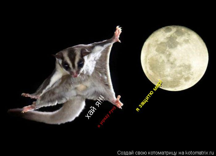 Котоматрица: хай я!!! я защитю мир! и украду луну...