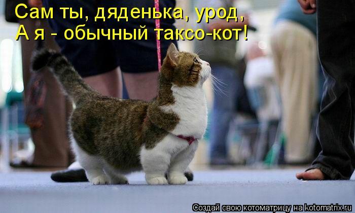 Котоматрица: А я - обычный таксо-кот! Сам ты, дяденька, урод,