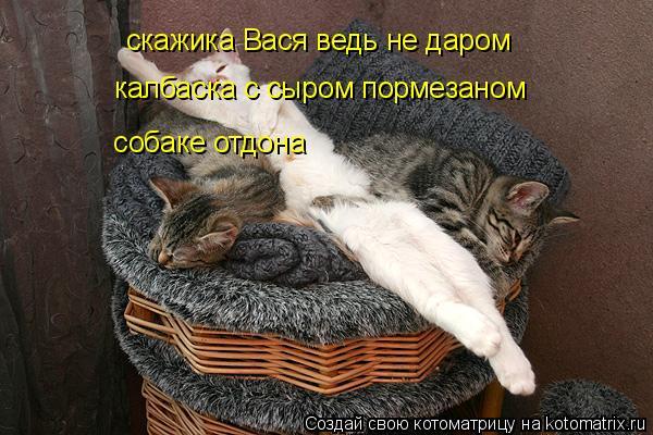 Котоматрица: скажика Вася ведь не даром   калбаска с сыром пормезаном   собаке отдона