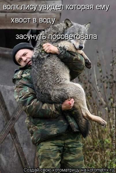 Котоматрица: волк лису увидел которая ему          хвост в воду    хвост в воду  засунуть посоветовала