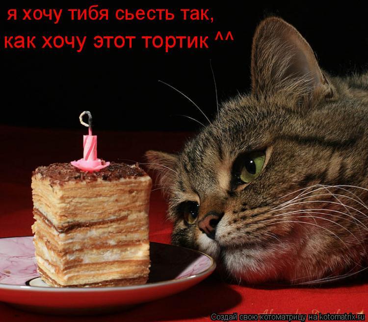 Котоматрица: как хочу этот тортик ^^ я хочу тибя сьесть так,