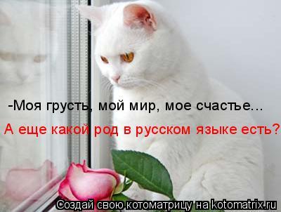 Котоматрица: -Моя грусть, мой мир, мое счастье... А еще какой род в русском языке есть?