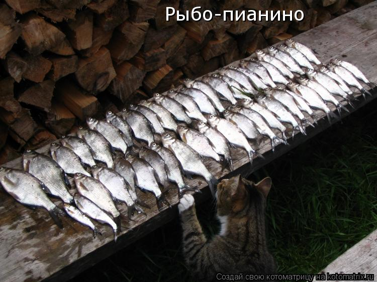 Котоматрица: Рыбо-пианино