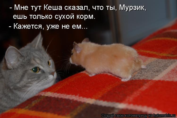 Котоматрица: - Мне тут Кеша сказал, что ты, Мурзик,  ешь только сухой корм. - Кажется, уже не ем...