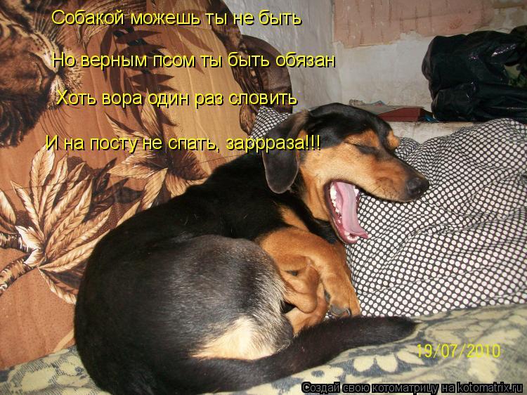 Котоматрица: Собакой можешь ты не быть Но верным псом ты быть обязан Хоть вора один раз словить И на посту не спать, заррраза!!!