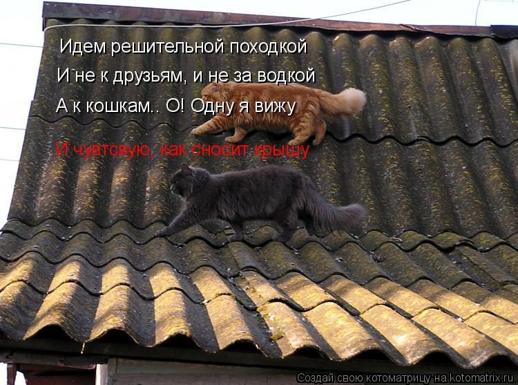 Котоматрица: Идем решительной походкой И не к друзьям, и не за водкой А к кошкам.. О! Одну я вижу И чувтсвую, как сносит крышу