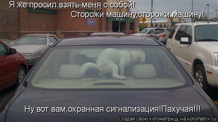 Котоматрица: Я же просил взять меня с собой! Сторожи машину,сторожи машину! Ну вот вам,охранная сигнализация!Пахучая!!!