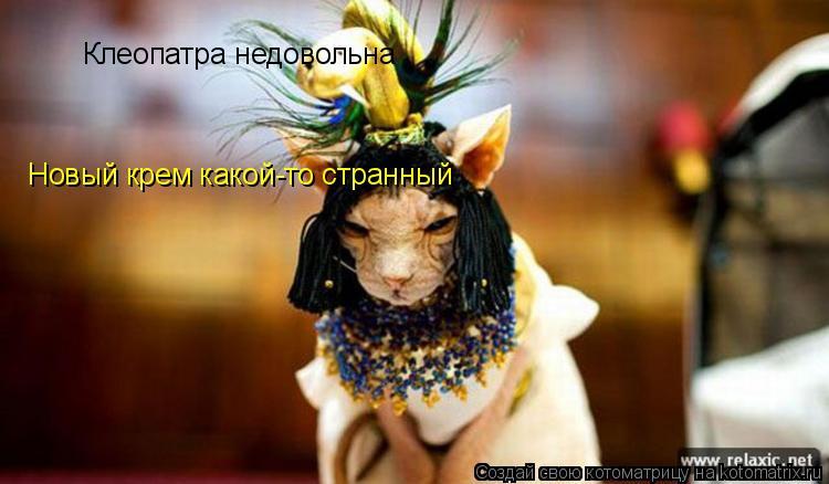 Котоматрица: Клеопатра недовольна Новый крем какой-то странный