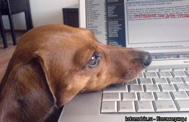 Котоматрица: интернет не для  псов