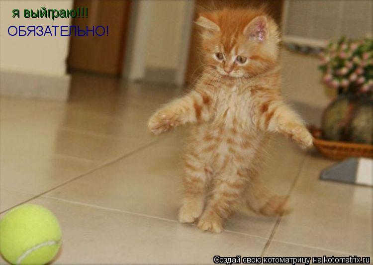 Котоматрица: я выйграю!!!  ОБЯЗАТЕЛЬНО!