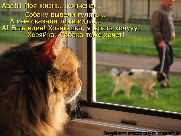 Котоматрица: Ааа!!! Моя жизнь...кончена...  Собаку вывели гулять... А мне сказали тоже идти... А! Есть идея! Хозяюшка, я жрать хочууу! Хозяйка: Собака тоже хочет!