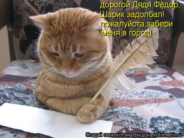 Котоматрица: дорогой Дядя Фёдор, Шарик задолбал! пожалуйста,забери меня в город!