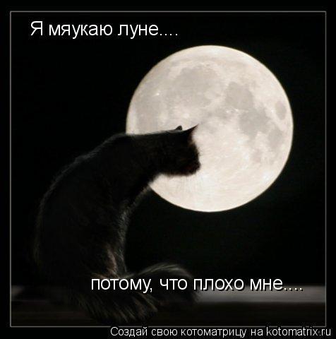 Котоматрица: Я мяукаю луне.... потому, что плохо мне....