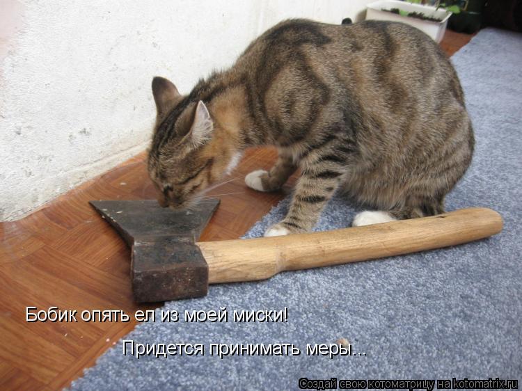 Котоматрица: Бобик опять ел из моей миски!  Придется принимать меры...
