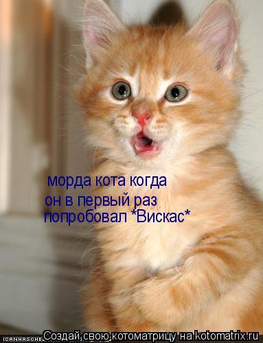 Котоматрица: морда кота когда он в первый раз попробовал *Вискас*