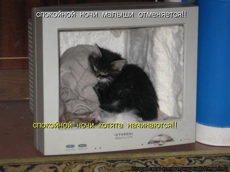 Котоматрица: спокойной  ночи  малыши  отменяется!! спокойной  ночи  котята  начинаются!!