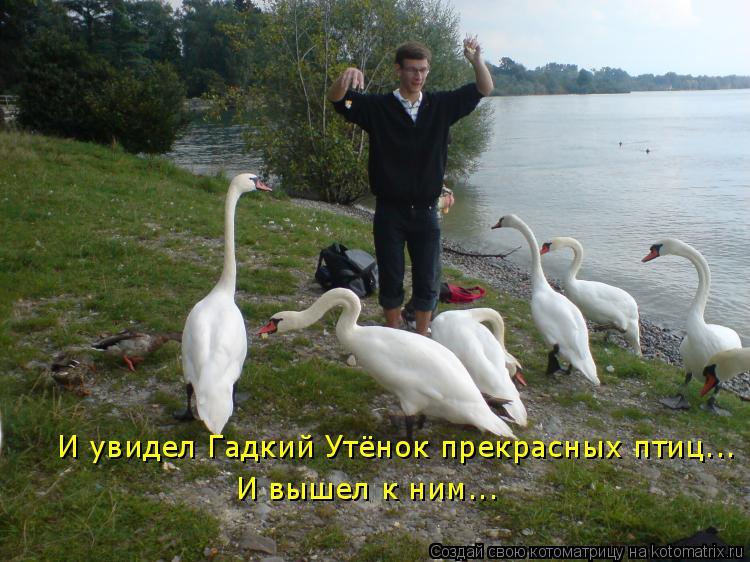 Котоматрица: И увидел Гадкий Утёнок прекрасных птиц... И вышел к ним...