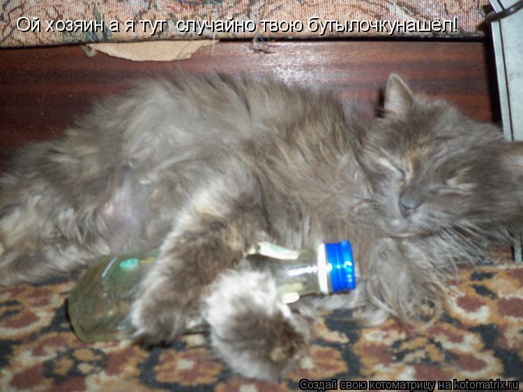 Котоматрица: Ой хозяин а я тут  случайно твою бутылочкунашёл!