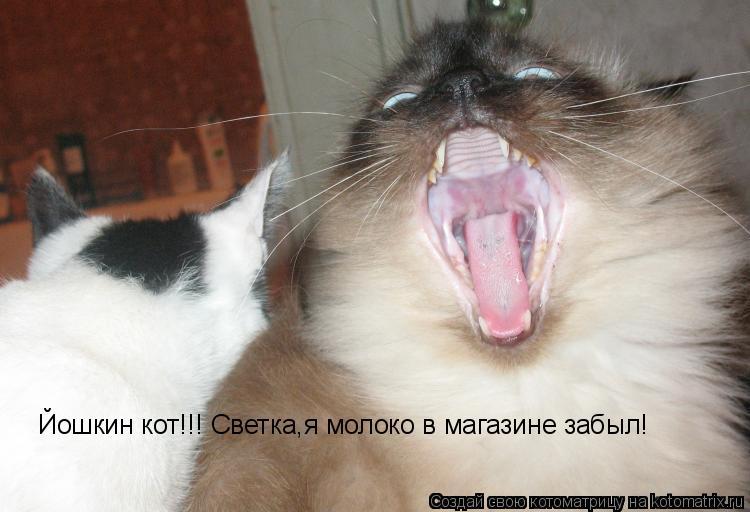 Котоматрица: Йошкин кот!!! Светка,я молоко в магазине забыл!