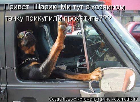Котоматрица: Привет  Шарик! Ми тут с хозяином,  тачку прикупили прокатить???