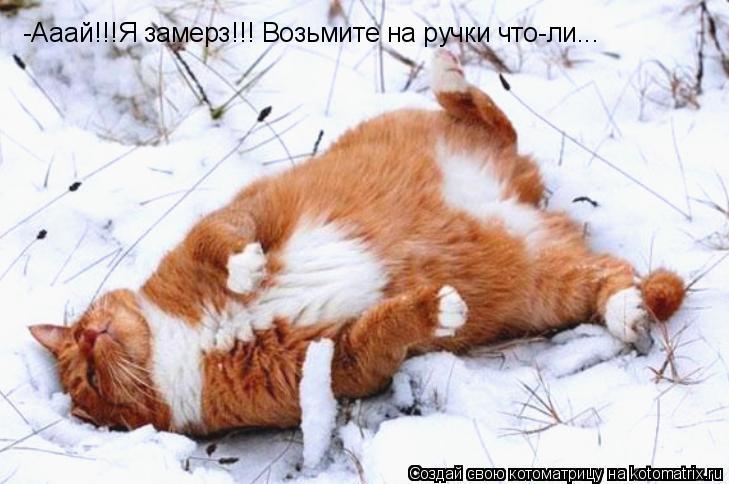 Котоматрица: -Ааай!!!Я замерз!!! Возьмите на ручки что-ли...