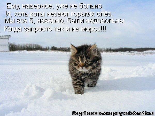 Котоматрица: Ему, наверное, уже не больно И, хоть коты незают горьких слёз, Мы все б, наверно, были недовольны Когда запросто так и на мороз!!!