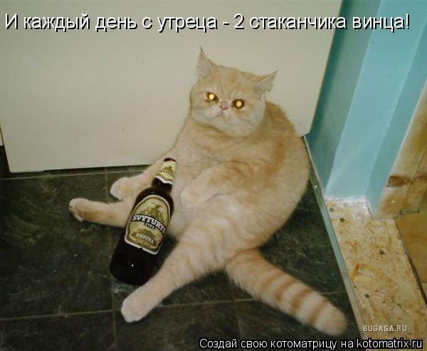 Котоматрица: И каждый день с утреца - 2 стаканчика винца!