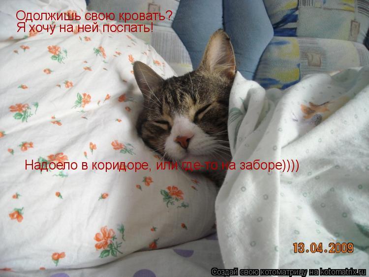 Котоматрица: Одолжишь свою кровать? Я хочу на ней поспать! Надоело в коридоре, или где-то на заборе))))