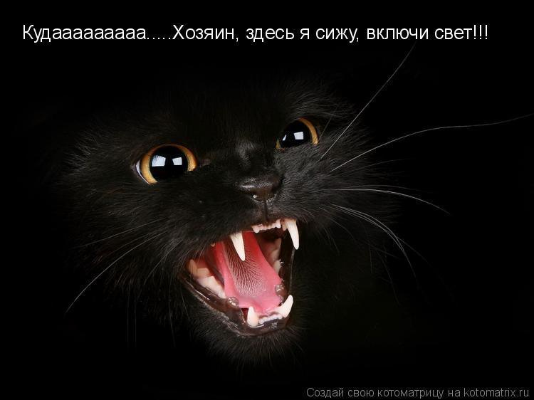 Котоматрица: Кудааааааааа.....Хозяин, здесь я сижу, включи свет!!!